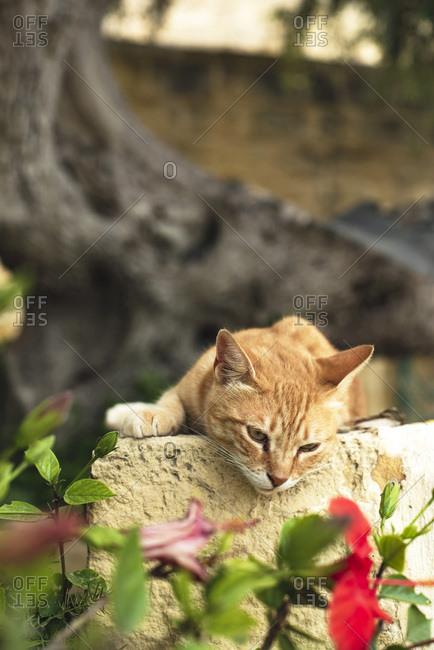 Orange cat resting on stone wall