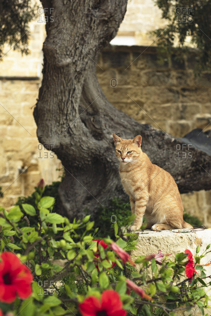 Orange cat sitting on stone wall