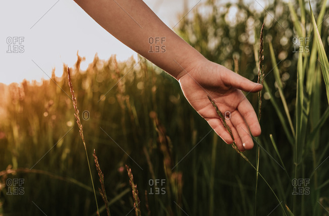 Child's hand brushing against blades of tall grass at golden hour