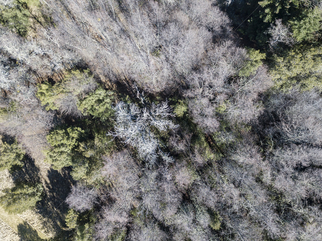 Aerial view of a forest in Bariloche, Argentina