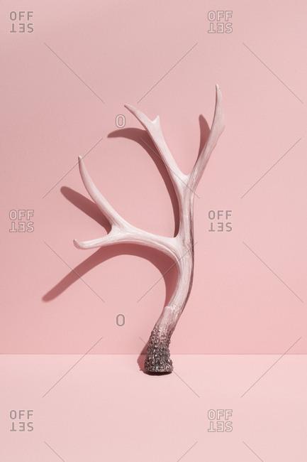 Pink antler