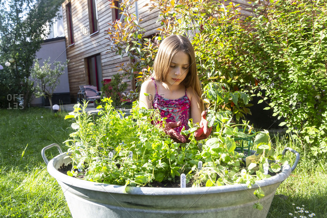 Girl planting herbs in zinc tub in the garden