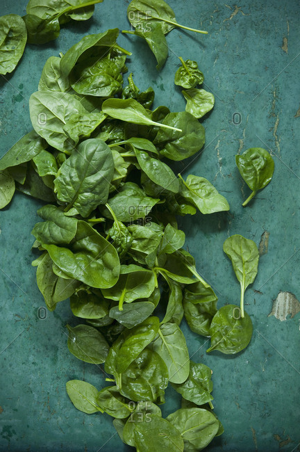 Spinach leaves on green background