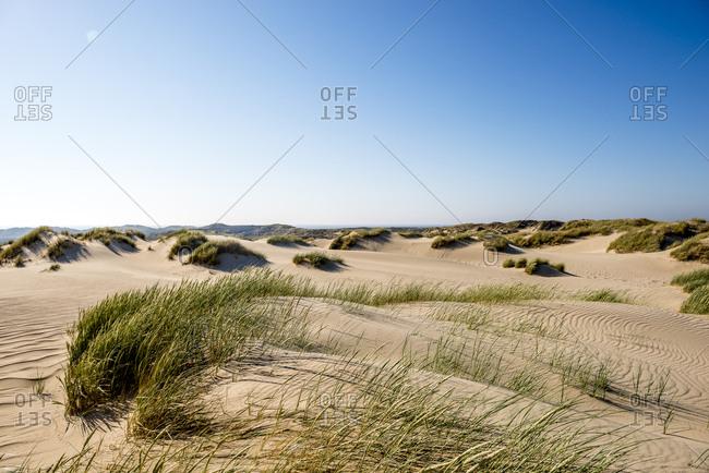 Germany- Schleswig-Holstein- Sylt- sand dunes