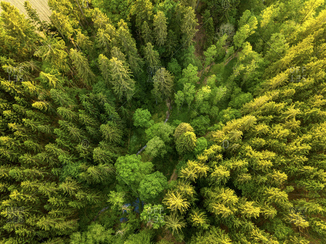 Germany- Bavaria- Aerial view of forest