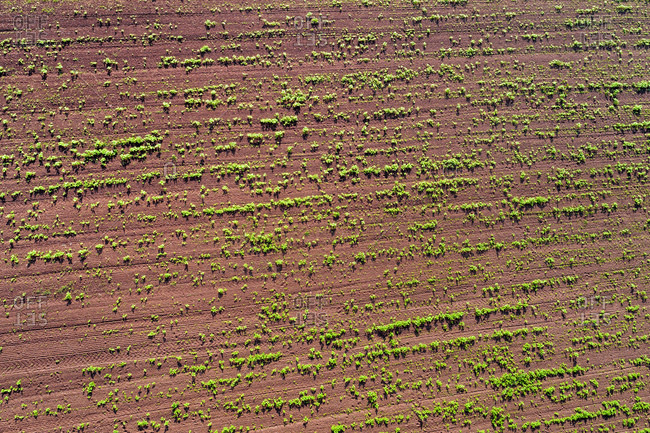 Germany- Baden-Wuerttemberg- Rems-Murr-Kreis- Aerial view of field with plants