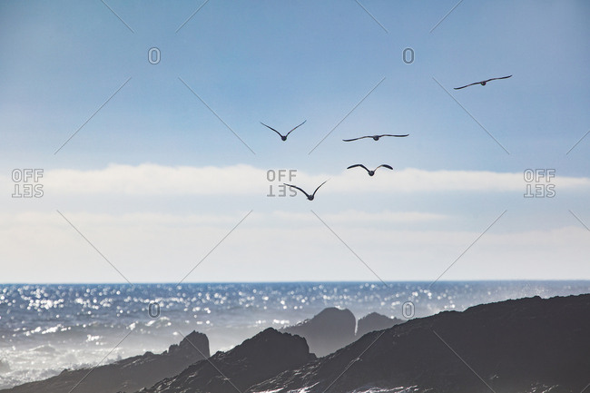 Africa- South Africa- Cape Town- Flock of birds flying over the sea and rocks