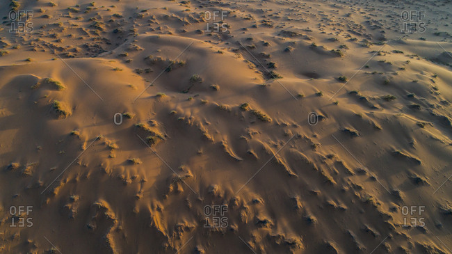 Patches of sparse vegetation cast shadows across sand dunes at dawn