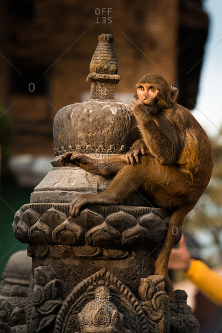 A Macaque sits atop a religious stupa at a Buddhist temple