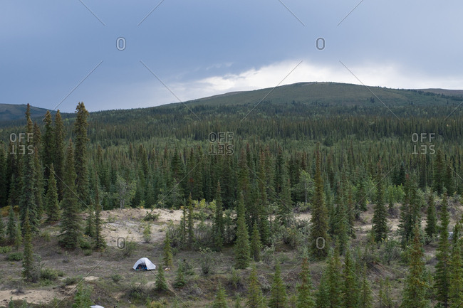 The boreal forest of Kobuk Valley National Park