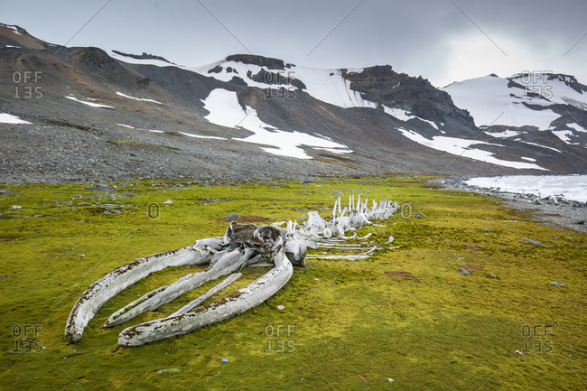 Whale skeleton assembled by Jacques Cousteau in Antarctica