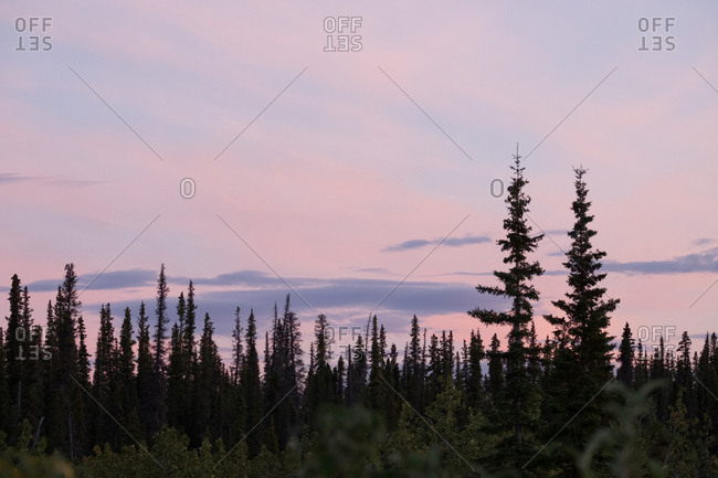 The boreal forest of Kobuk Valley National Park at sunset