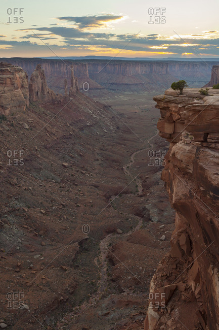 A lone tree on a cliff above a desert canyon at sunset