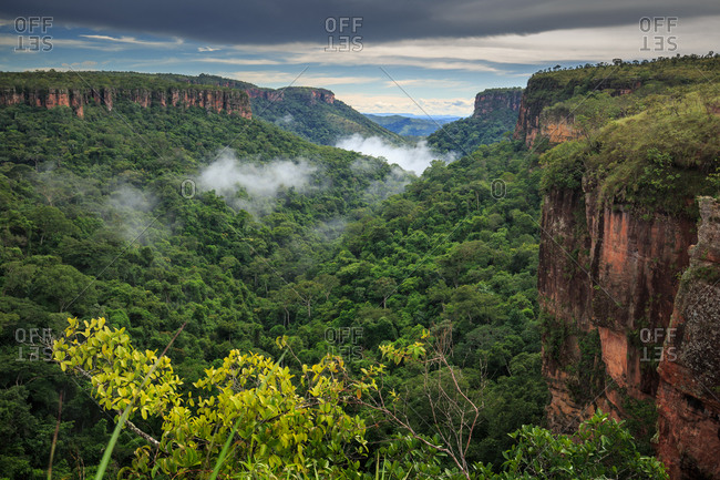 Clouds forming on the Cerrado forest