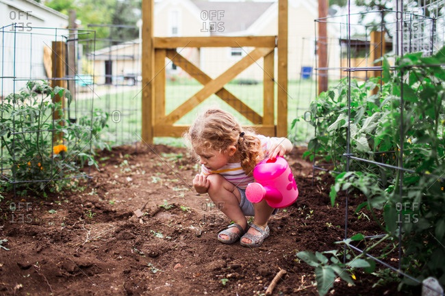 Girl looking at soil while watering tomatoes in a garden