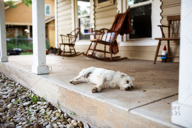 Dog relaxing on front porch