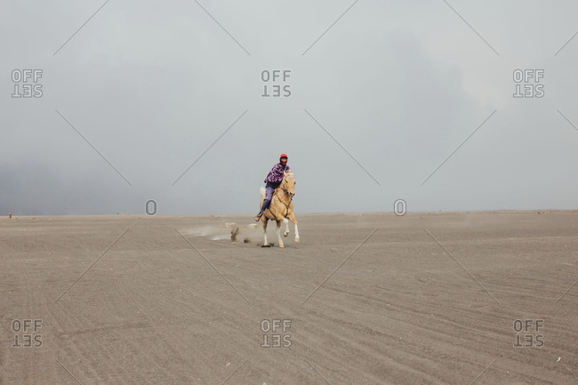 Mount Bromo, Indonesia - September 13, 2015: Local riding pony at a gallop in sandy terrain of Bromo National Park