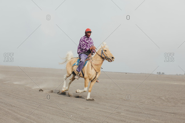 Mount Bromo, Indonesia - September 13, 2015: Close up of local riding pony in sandy terrain of Bromo National Park