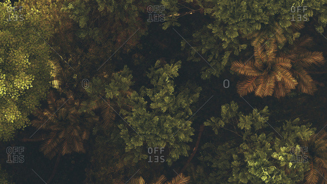 Bird's eye view of a forest