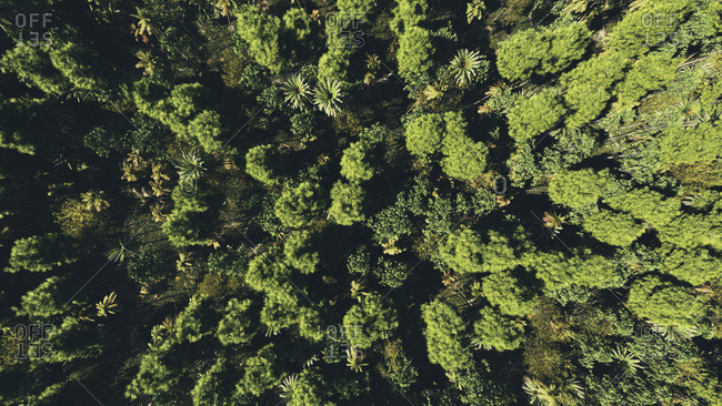 Bird's eye view of a green trees in a forest