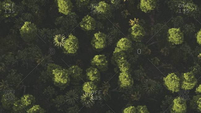Bird's eye view of a lush green forest