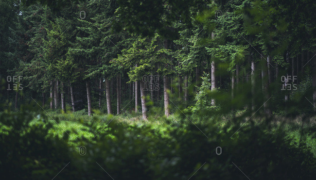 Dense foliage in a forest