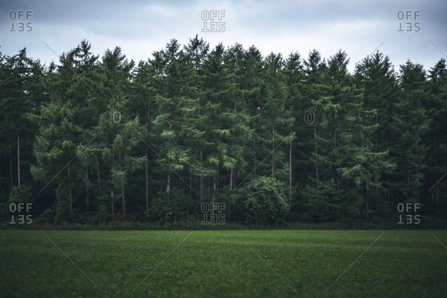 Green field at the edge of a forest