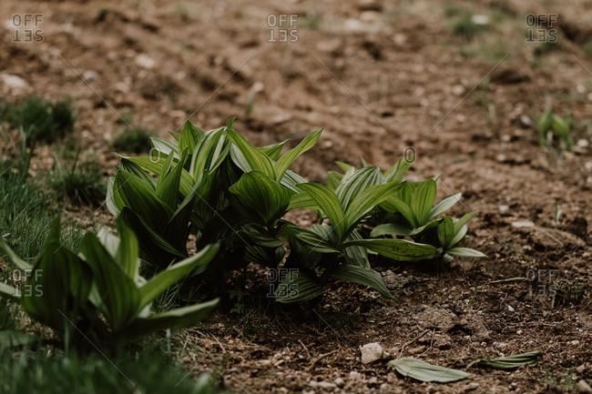 Plants growing alongside trail