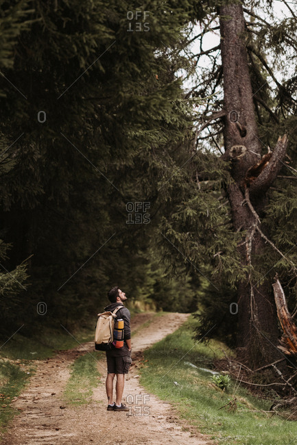Hiker wearing backpack looking up at tall trees in forest