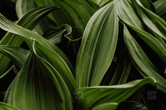 Close-up of leaves of forest plants
