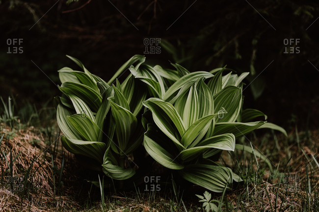 Green plants growing on forest floor