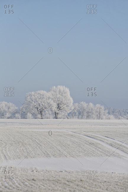 Fresh snowfall in winter scenery
