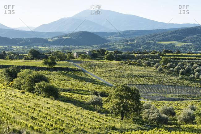 Roaix, Vaucluse, Provence, Provence-Alpes-Cote dAzur, France, vineyards near Roaix, Arrondissement Carpentras,