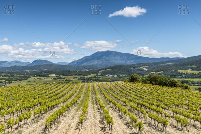 Roaix, Vaucluse, Provence, Provence-Alpes-Cote dAzur, France, vineyards near Roaix, Arrondissement Carpentras, Mont Ventoux in the background,