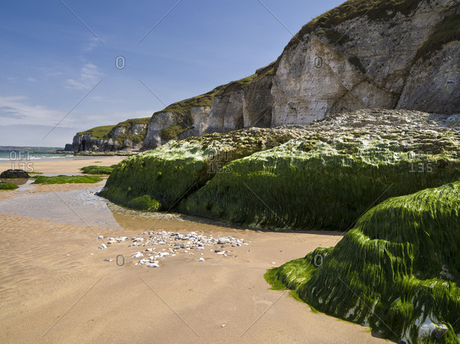 Northern Ireland, Antrim, Causeway Coast, mussel lime rock on the steep coast close Portrush