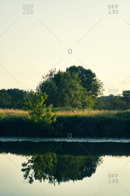 Shore on a river with tree and reflexion in the water in the evening light