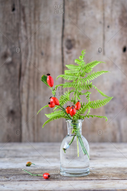 Autumnal still life with rose hips and fern