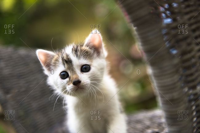 Young cat, animal, farm