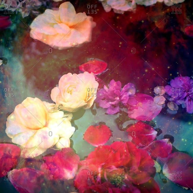 Flowers, water, float, detail, blur,