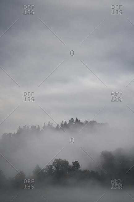 Black Forest, , forest, rain, fog