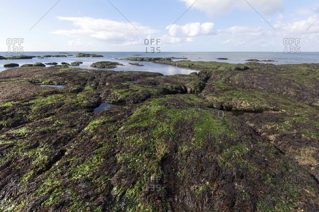 Breton rocky shore at low tide