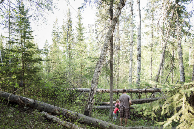 Father and daughters working near fallen trees together in the woods