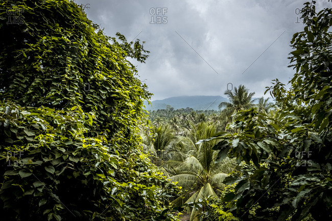 Thailand- Koh Phangan- landscape at stormy atmosphere