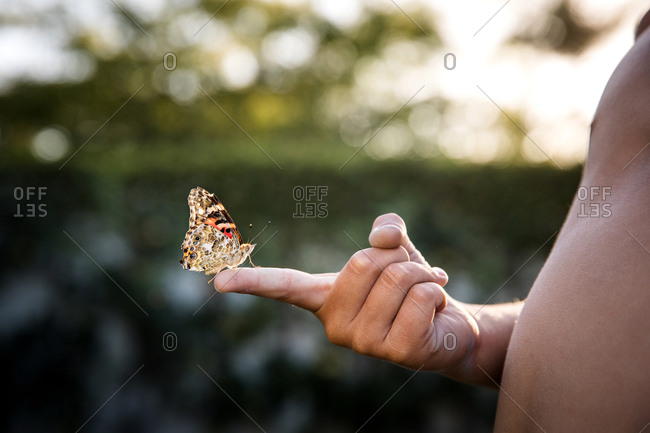 Butterfly on a child's finger