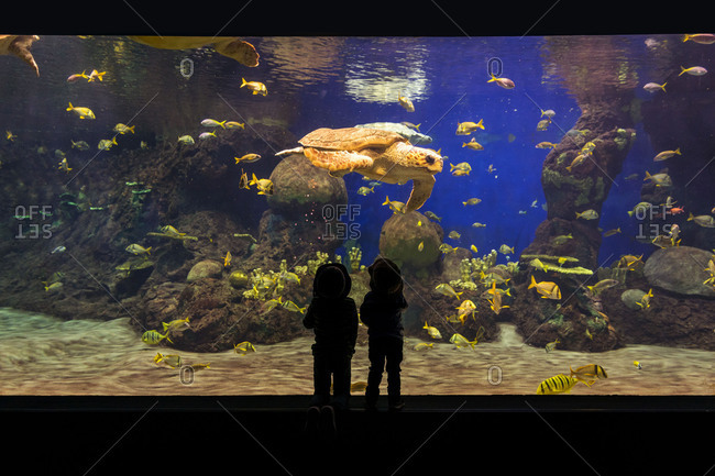 Two children looking at large sea turtle in an aquarium
