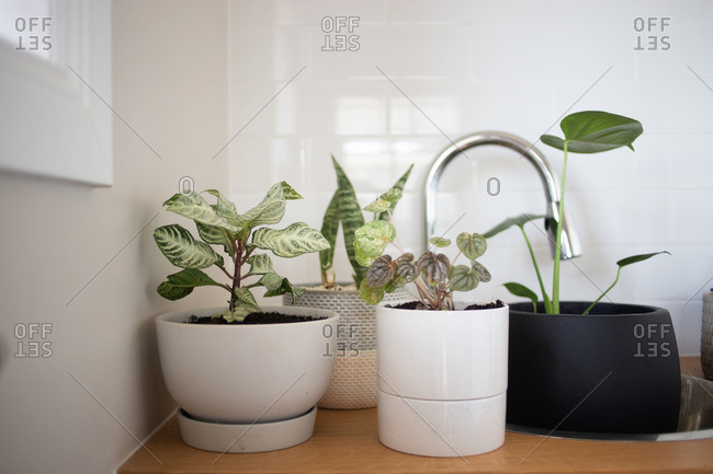 Variety of plants in pots on kitchen counter