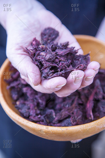 Hand holding dried sorrel