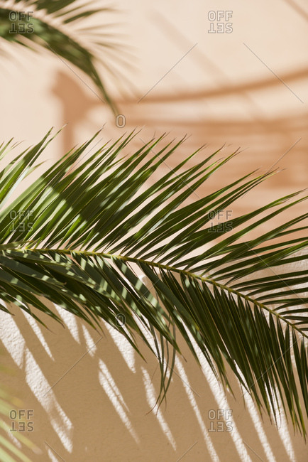 Detail of palm frond against exterior wall of house