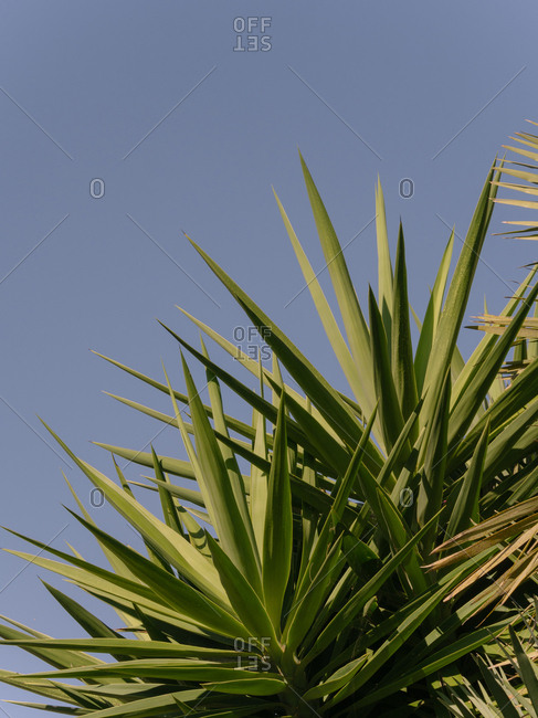 Plant with spikey leaves against clear sunny sky