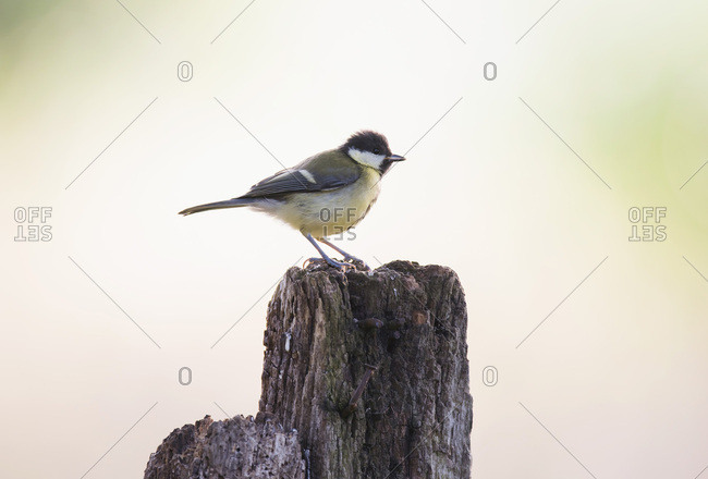 Small bird perched on wooden post